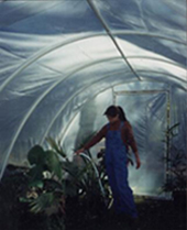 Build a Greenhouse - PVC Greenhouse Plans - Backyard Greenhouse